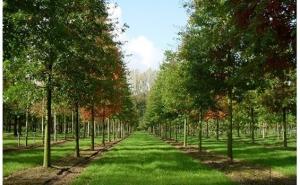 Marktverkenning Nederlandse export sierteelt naar Roemenië