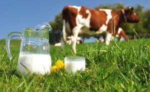 Minister van Landbouw plaatst vraagtekens bij melkprijzen
