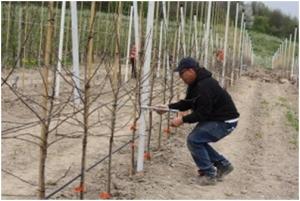 Roemenie behoefte aan vernieuwing boomgaarden