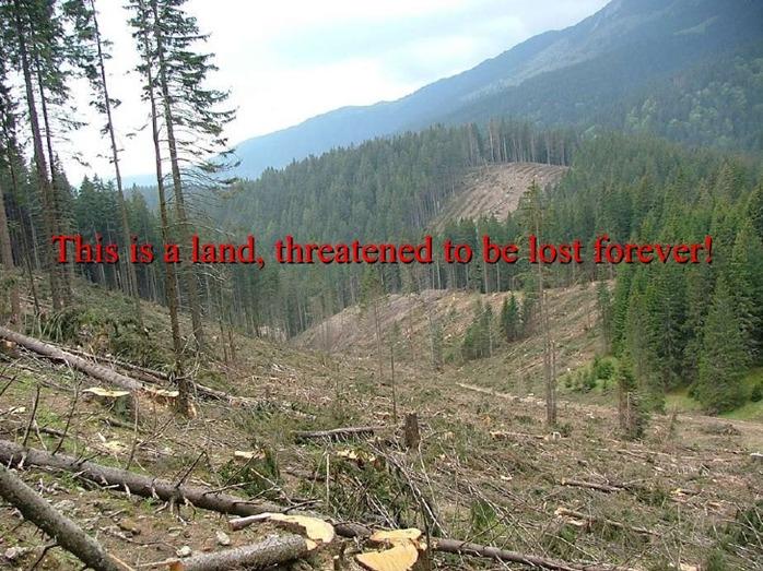 Focus op illegale houtkap van de laatste oerbossen van Europa