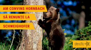 Hornbach wil geen illegaal hout van Houtindustrie Schweighofer