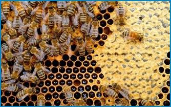 Roemenie is uitgegroeid de grootste honingproducent van de EU